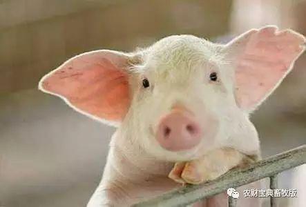 【国际猪业】好文章!影响中国猪业发展的六大关键因素2454.png