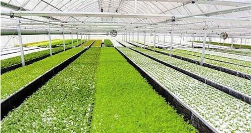 国内植物工厂哪家强?看看这些数据