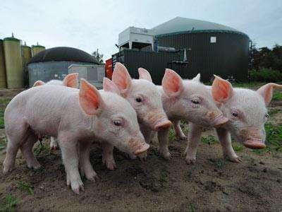 【国际猪业】猪业最强风口:互联网+ 您在路上了吗?569.png